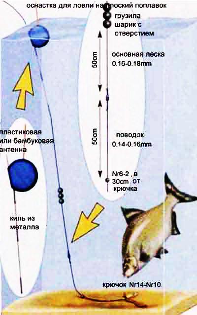 рыбалка на карася на поплавочную удочку с кольцами